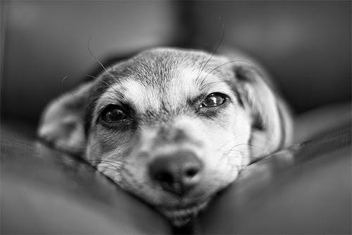 Can U Give A Dog Aspirin