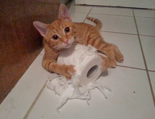 Funny cats - part 81 (40 pics + 10 gifs), cat pics, cat vs toilet paper