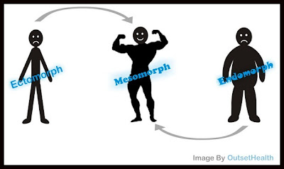 ectomorph, mesomorph, and endomorph