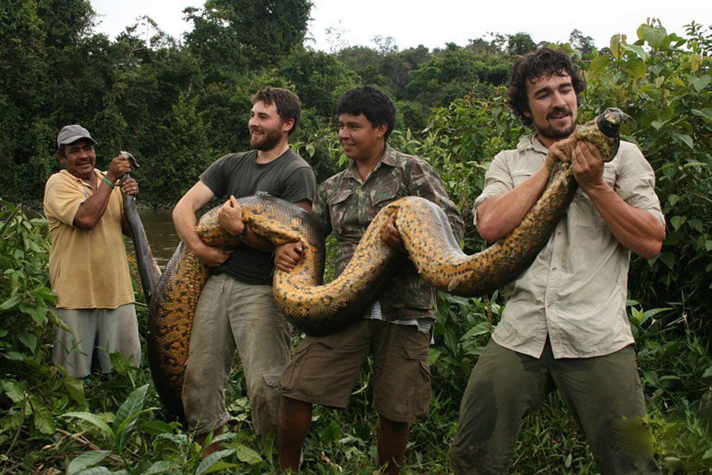 Blidardjel un anaconda de plus de 6 m tres de long for Noticias actuales de espectaculos