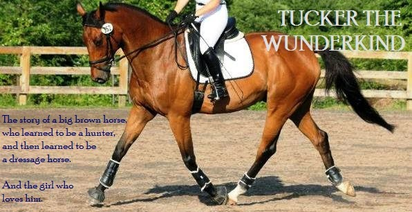Tucker the Wunderkind | Chronicles from Hunter Land to Dressage World