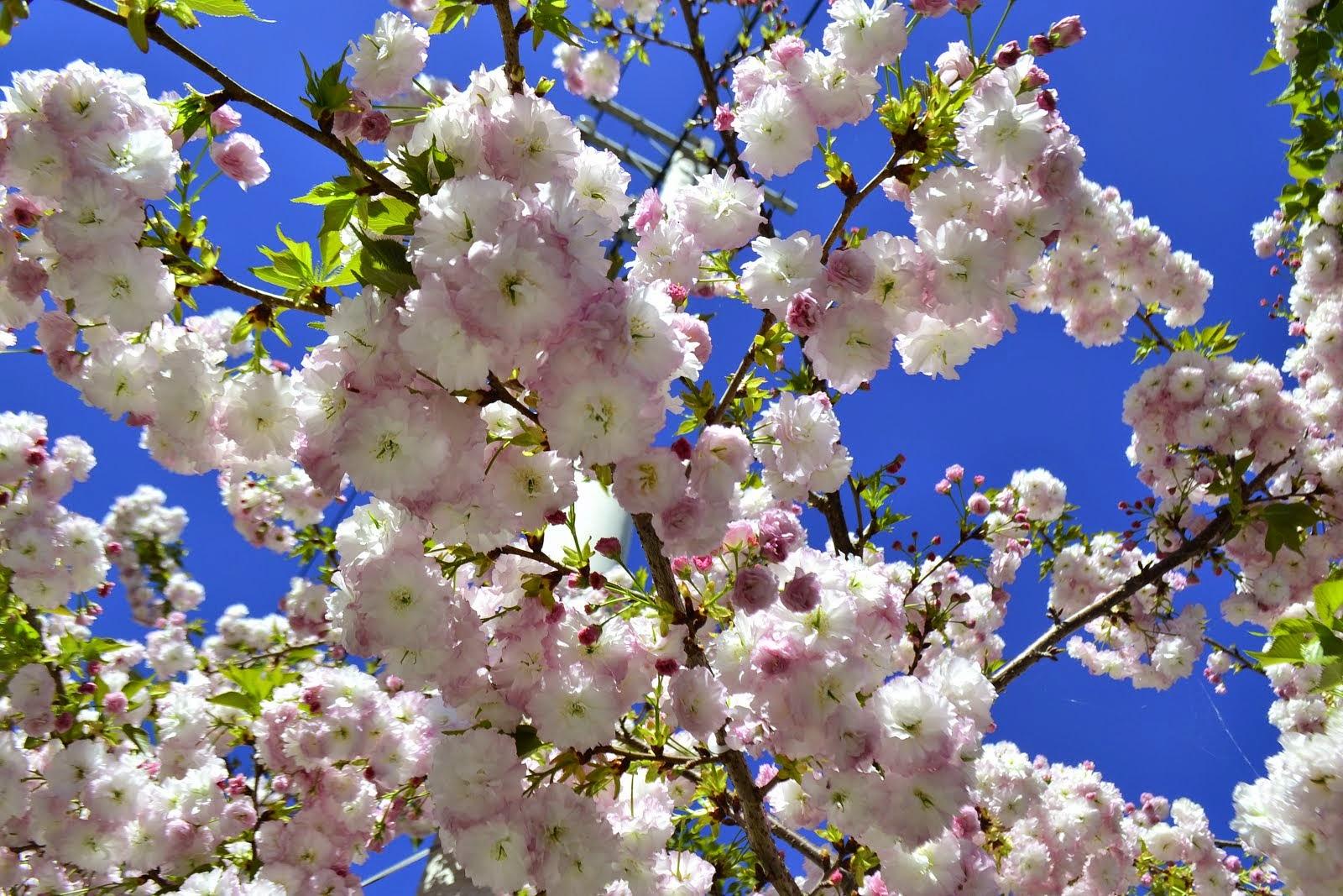 春天的花季