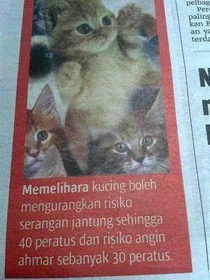 Kelebihan bela kucing   wansite