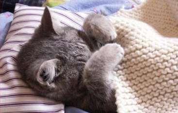 sick_cat_swine_flu.jpg