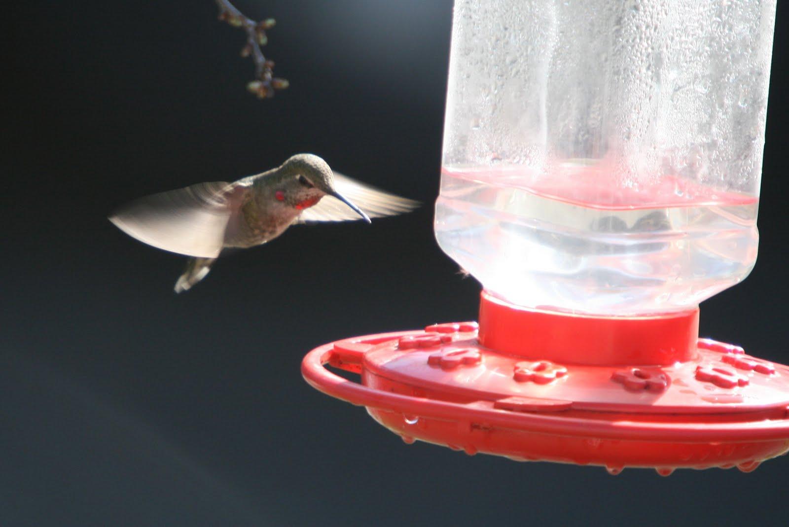 http://3.bp.blogspot.com/-FNvaLO2ts2w/Ta8fcbsjDVI/AAAAAAAAADI/-6PE29pCoAU/s1600/hummingbird4.jpg