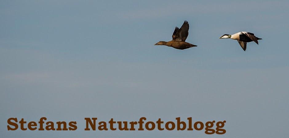 Stefans Naturfotoblogg
