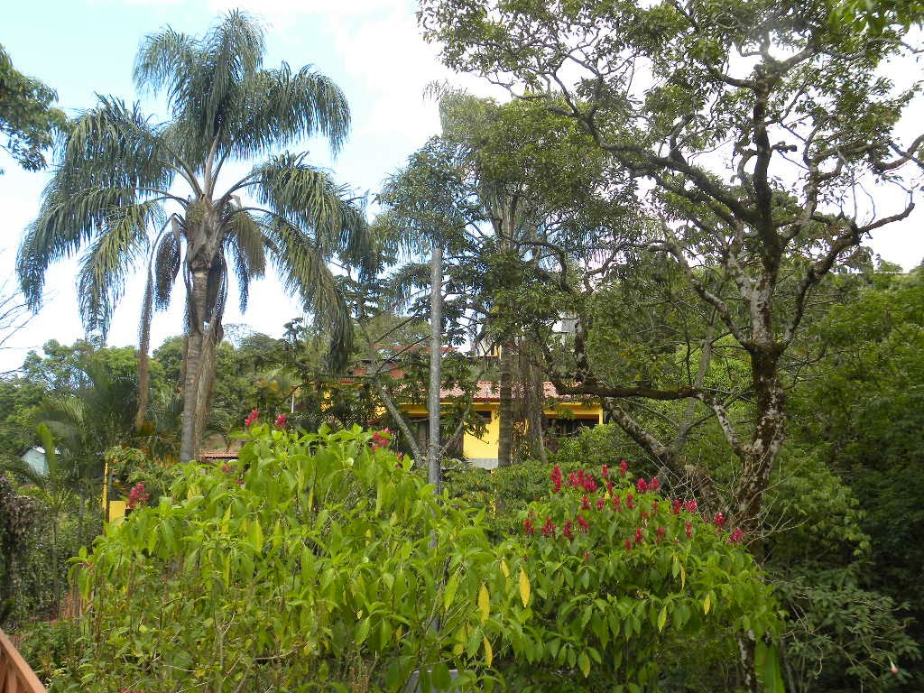 expat dating in costa rica Costa rica is a country in central america it shares borders with panama and nicaragua  live in costa rica: tips for living in costa rica overseas and expat job portals  if you are.