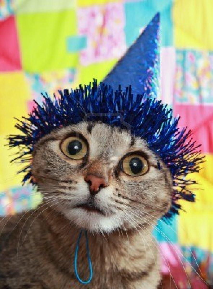 fête des chats