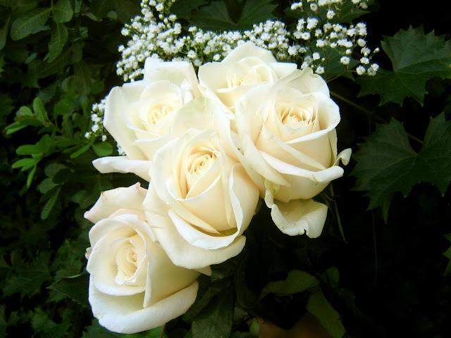 Yellow Wallpaper: White Roses Beautiful White Rose Wallpaper