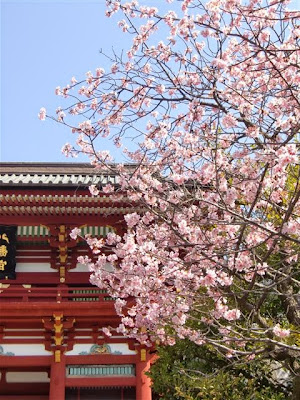 鶴岡八幡宮の河津桜