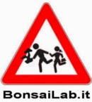 http://www.bonsailab.it/
