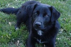Josie, 5/23/2011