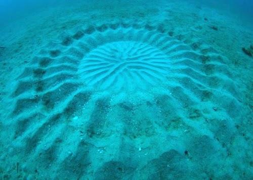 海底に存在する謎のミステリーサークル。人間が探求した海底は、なんとたった5%未満ということ謎だらけの訳だ。