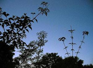 tumbuhan dan matematika