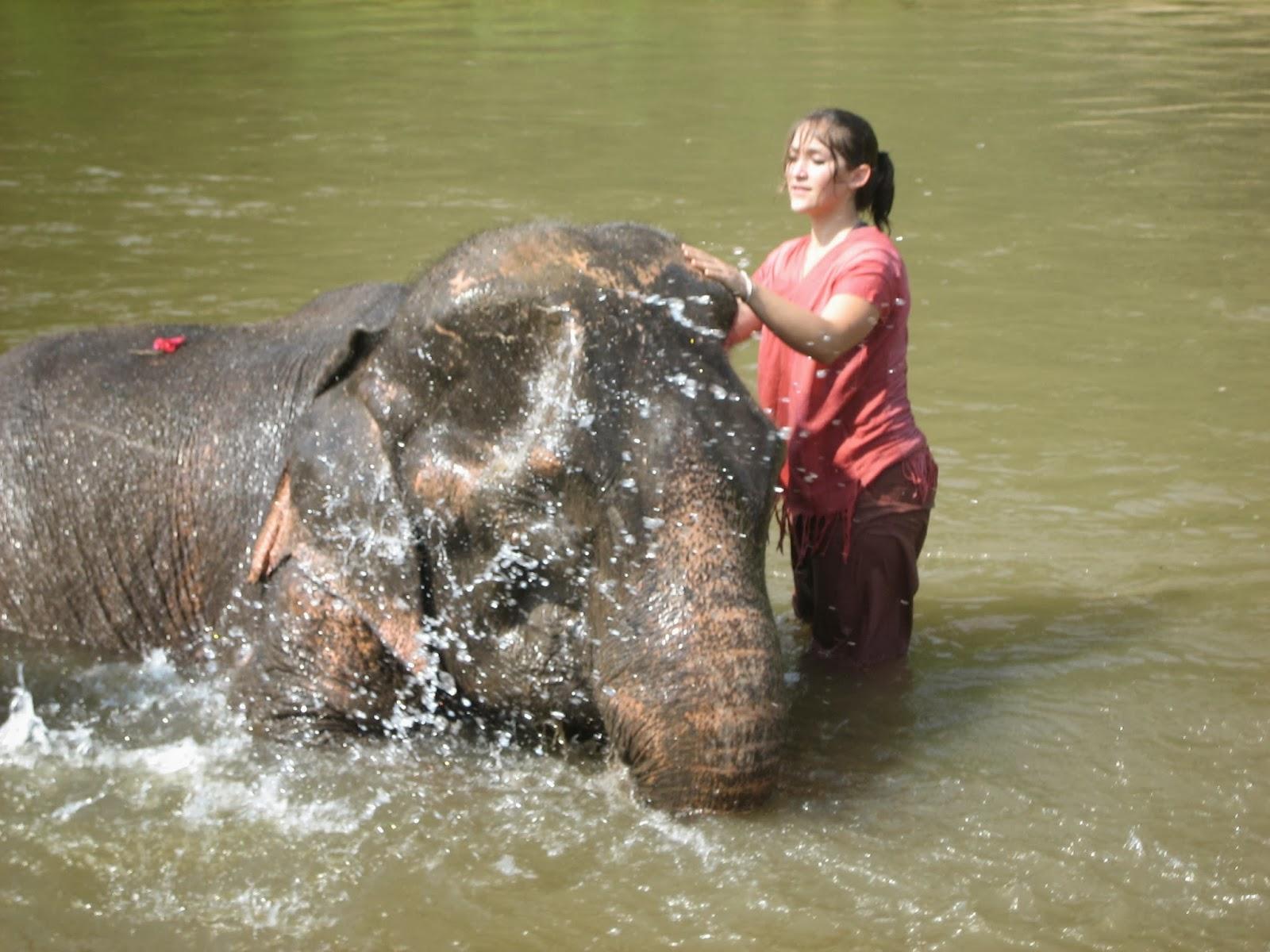 chiang-mai-elephant-bath