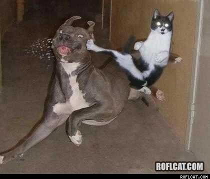 KUNG FU FIGHTING!