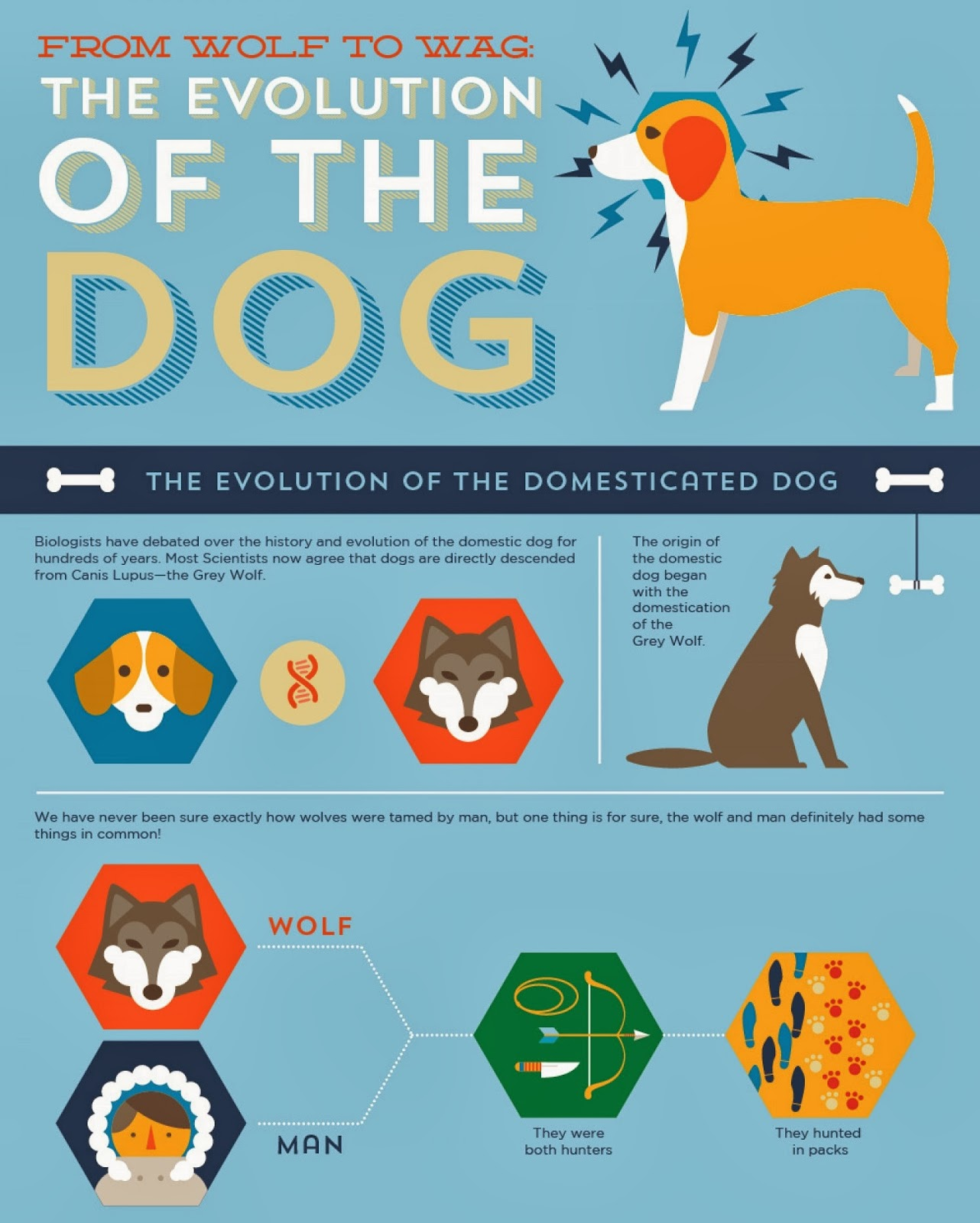 http://visual.ly/evolution-dog