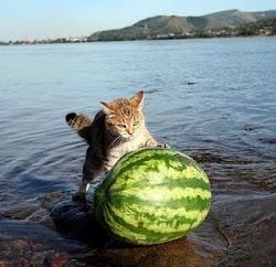 """βραβείο για το μπέμπη απο  marilise """"για γάτους με πέταλα"""""""