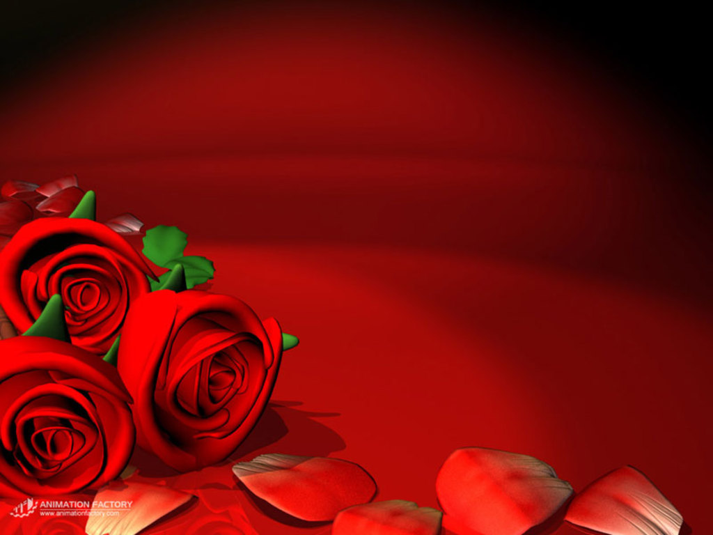 amazing red flower wallpapers - photo #11