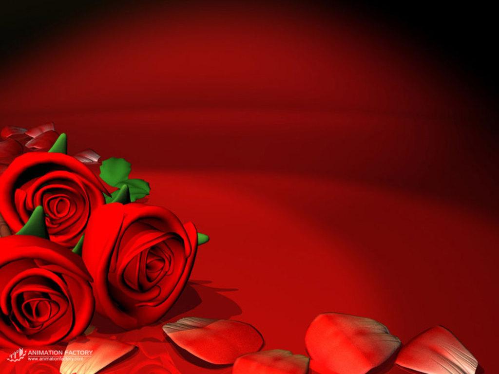 red rose desktop background - photo #23