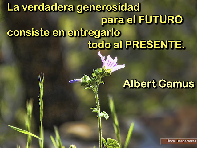 Finca Despertares - Albert Camus