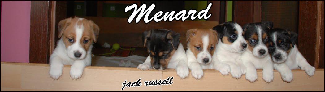 Menard & Jack Russell Terrier