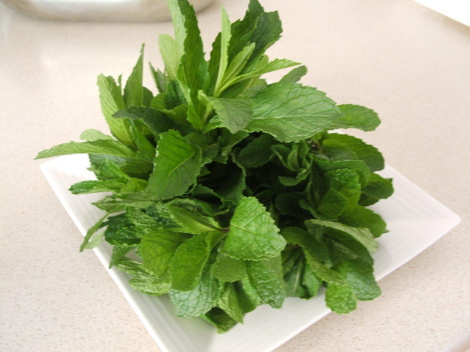 Fresh Mint Tea Recipe — Dishmaps