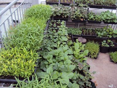 Vườn rau sạch
