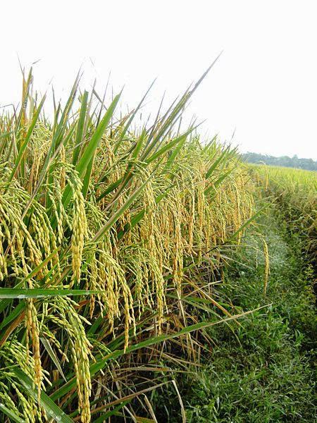 nutrisi pangan, kualitas tanaman pangan