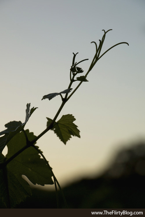 Sunset, Baker Ridge, Grape Vine