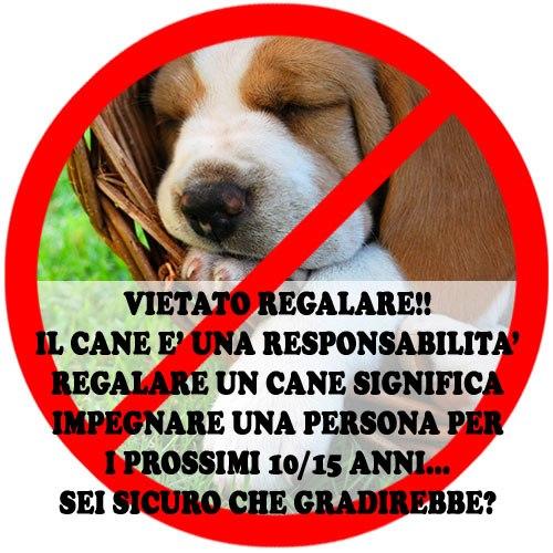 Acqua e farina sississima non regalare un cucciolo a natale for Animali a natale