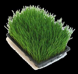 [Renungan] Kisah Rumput
