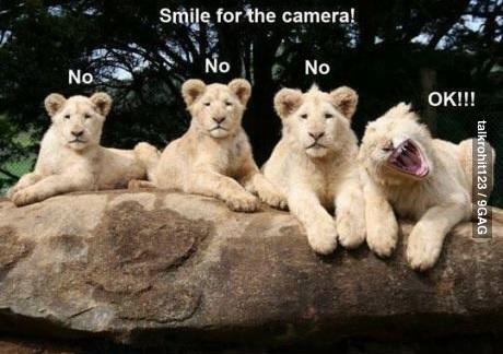 foto de leones