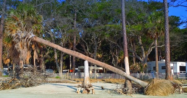 Hunting Island State Park in South Carolina with photo by Dear Miss Mermaid