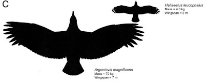 ave prehistorica de Argentina Argentavis