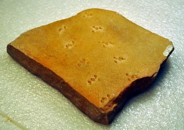Prehistoric spider footprints found in Arizona
