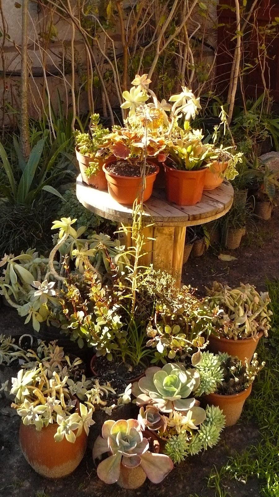 Jardines de cactus y suculentas julio 2012 - Jardines de cactus y suculentas ...