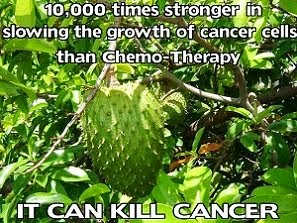 Graviola invinge cancerul