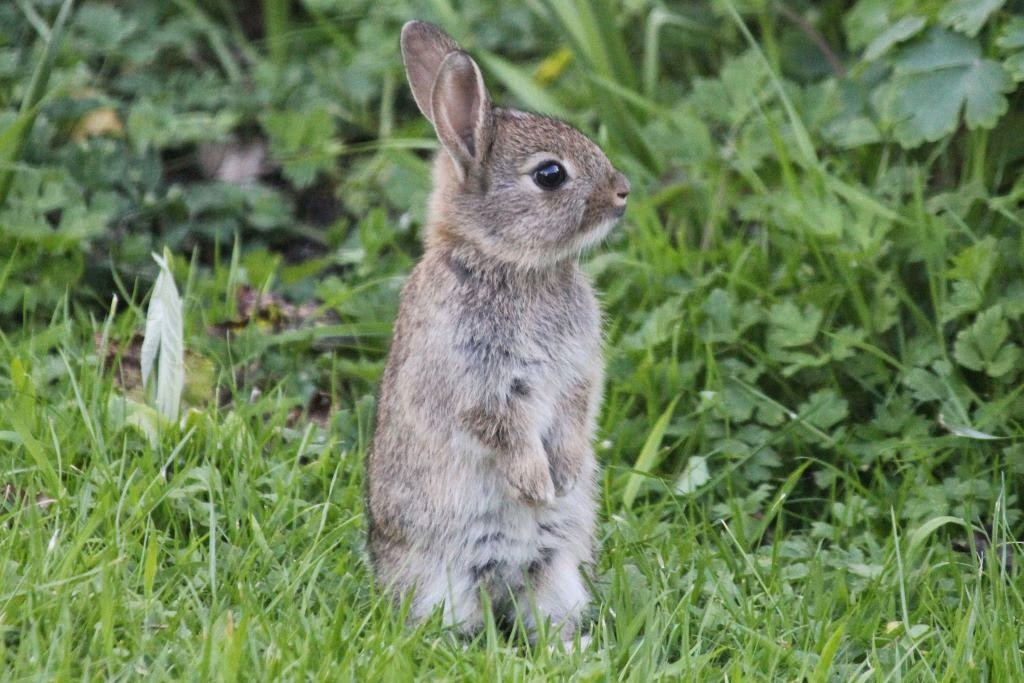 animals and kids cute baby rabbits