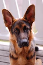 Felix - the dog ♡