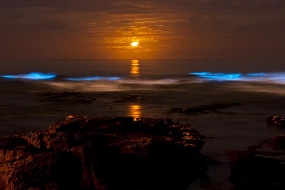 Lago brilla en la oscuridad en Australia Bioluminiscencia+luna+