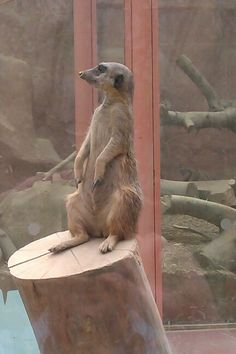 Meerkat Rounday Park Leeds Tropical world