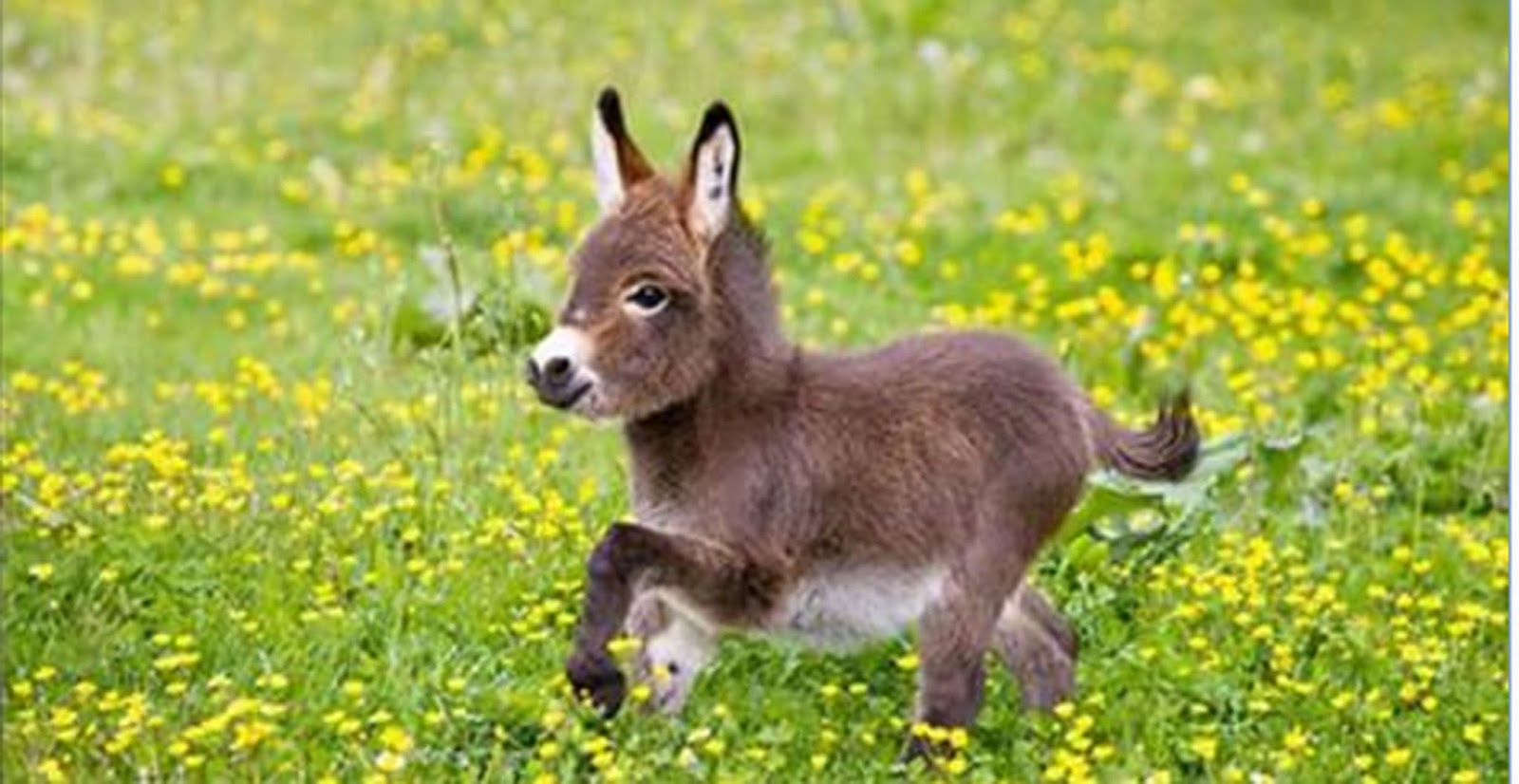 how to get a donkey