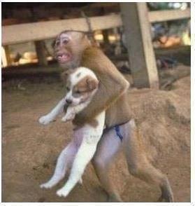 Foto Monyet Unik