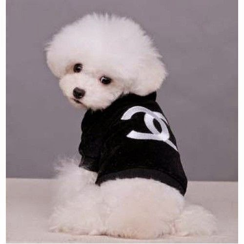 So Adorable Cute Bichon Fris
