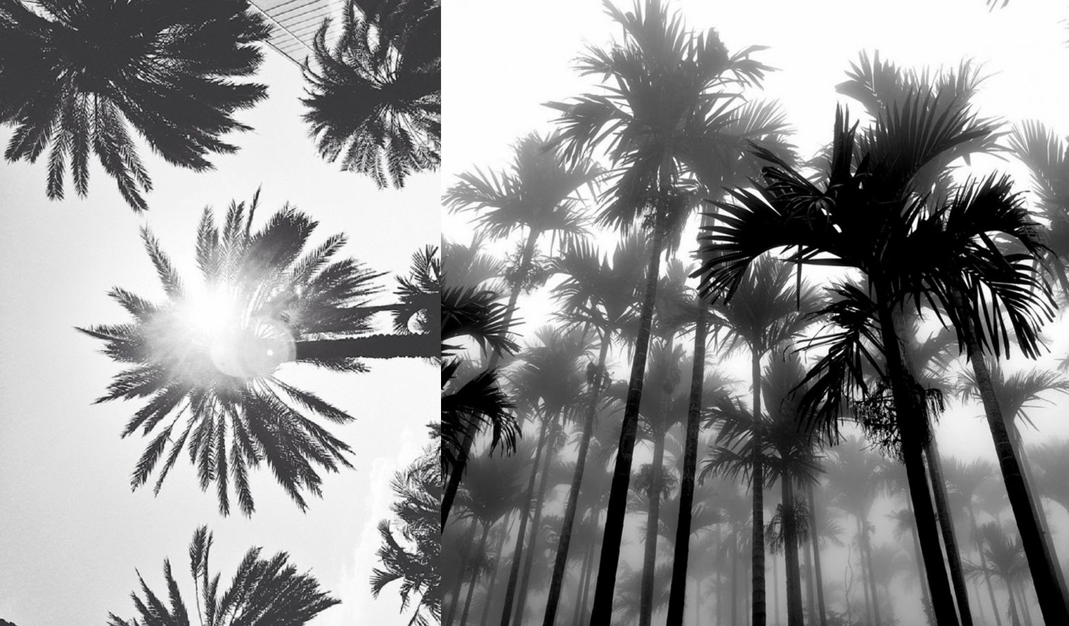 Palm Trees Background Black And White Palm Trees Black And White