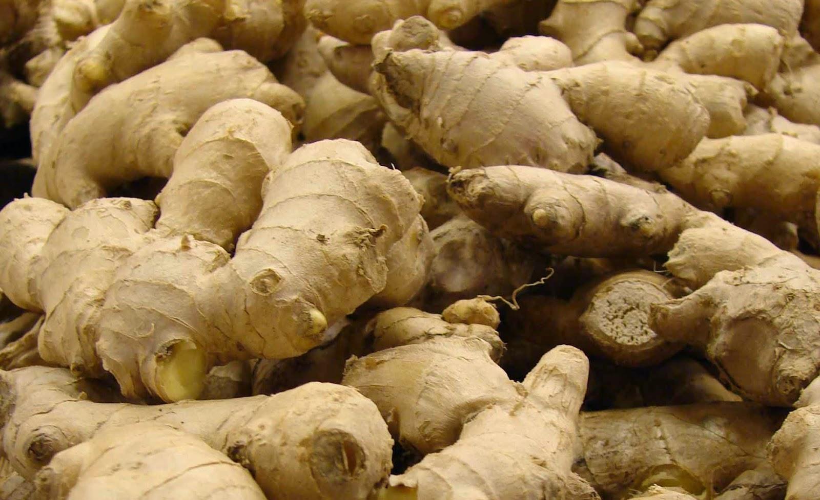 Pembiakan Vegetatif batang tuber rizom