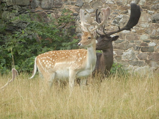 Deer at Bradgate Park, Leicestershire