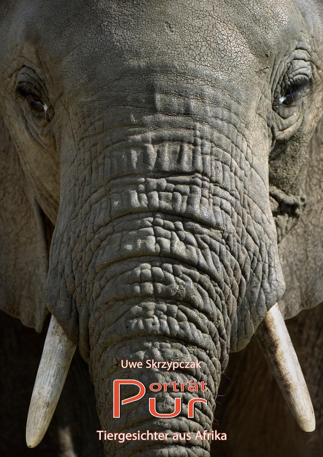 PORTRÄT PUR - Tiergesichter aus Afrika. Kalender von Uwe Skrzypczak