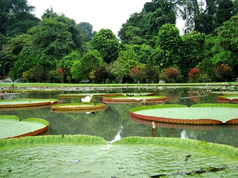 Tempat Wisata Pilihan Kebun Raya Bogor
